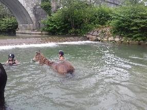 Le Cheval de Feu Dompierre sur Veyle