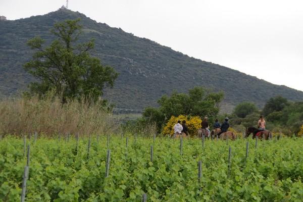 randonnées vigneronnes